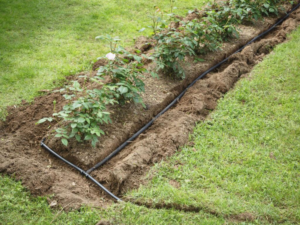 nawadnianie roślin